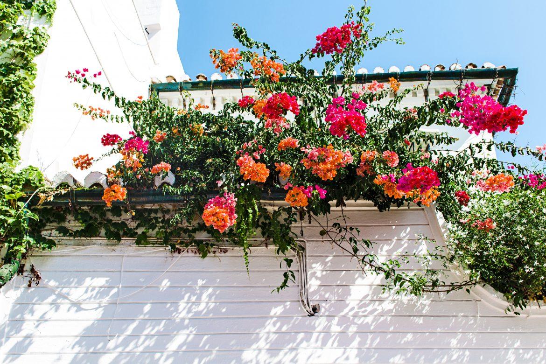 Fleurs accrochées à un balcon vue d'en dessous